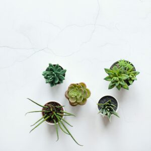 21 Unique Planters to Enhance Any Home