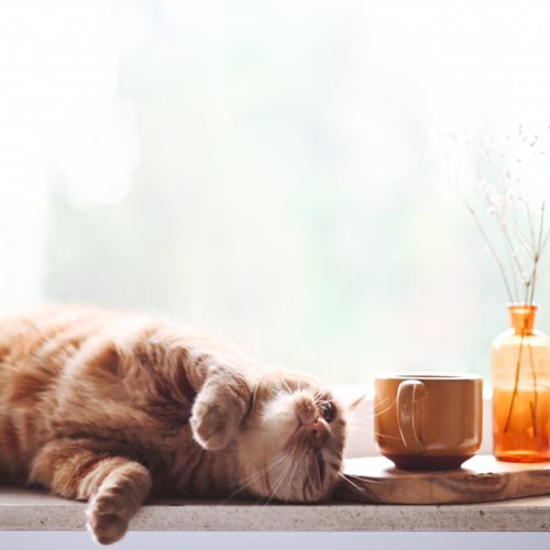 17 Adorable Cat Mugs for Any Cat Lover