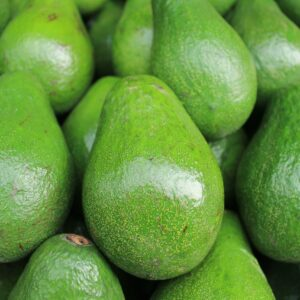 How to Grow an Avocado Tree Indoors (From Pits or Grafts)