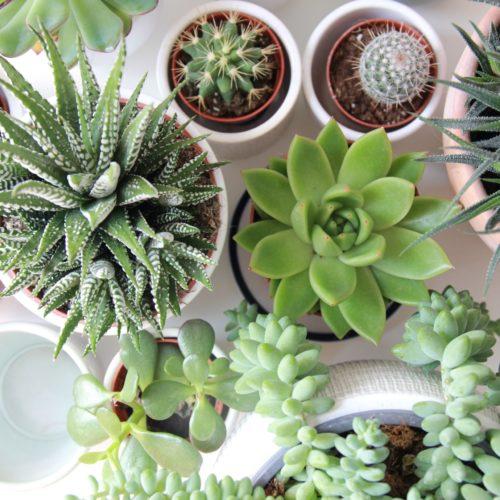 18 Cute Succulent Pots That Nobody Can Resist