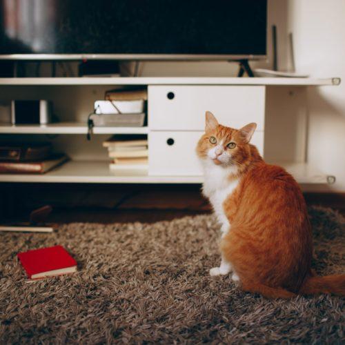 7 Best Pet-Friendly Rugs That Fido Won't Destroy