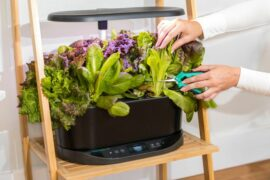 AeroGarden Reviews – Which System Is Best?