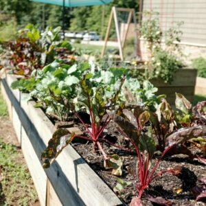 16 Gardening Hacks to Help Indoor & Outdoor Plants Thrive