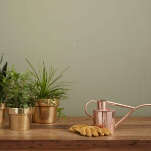 Apartment Gardening: Everything You Need to Know to Get Started