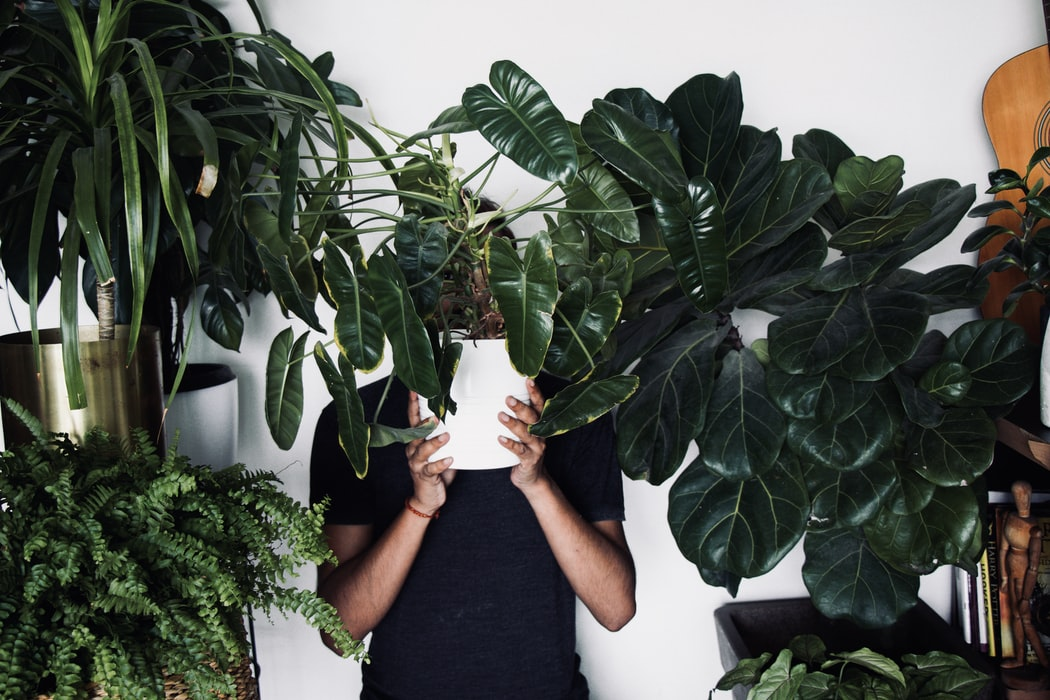 15 Rare Houseplants & Where To Find Them