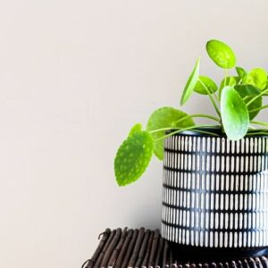 Top 30 Easy House Plants For Beginners