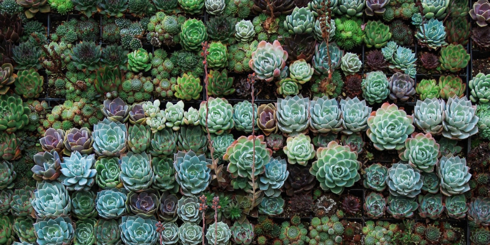 11 Best Terrarium Plants & Why You Need Them