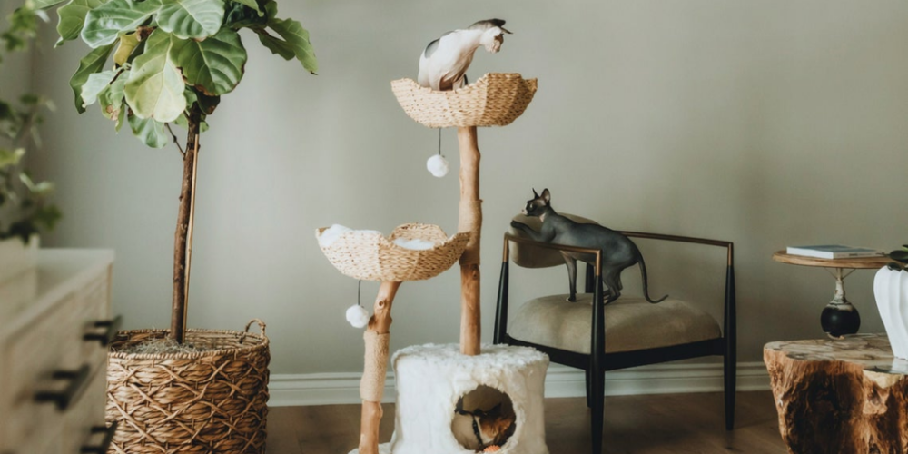 Best Unique Cat Trees 2021: Live in Style