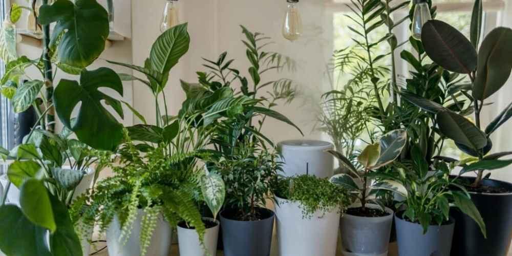 17 Best Windowsill Plants & How to Grow Them